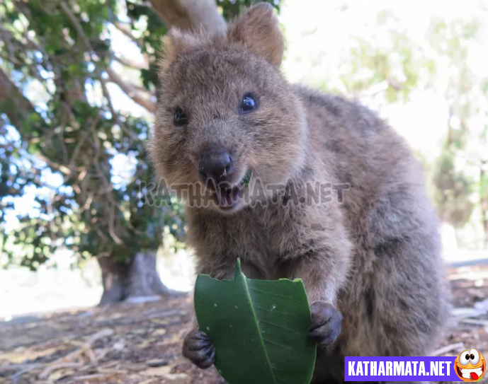 22 φωτογραφίες που δείχνουν πως η Αυστραλία δεν έχει καμία σχέση με τα τουριστικά φυλλάδια!