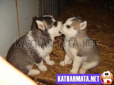 Θεότρελα ζώα (φωτογραφίες)
