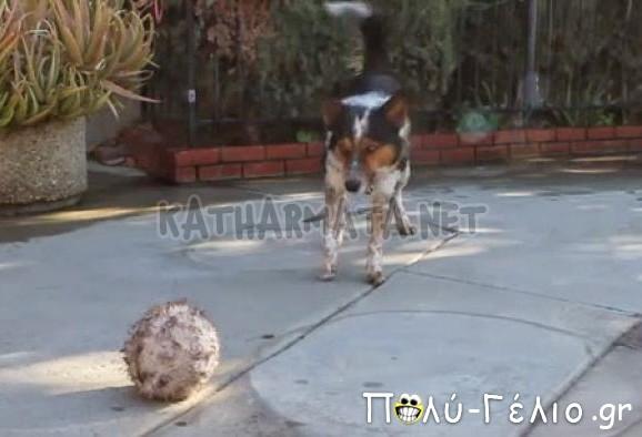 Ο πιο εκπαιδευμένος σκύλος Χαχαχαχ [Video]