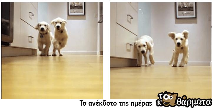 Σκυλιά βοηθούν μωρό να το «δραπετεύσει» από το κρεβάτι του και το βίντεο έγινε ανάρπαστο
