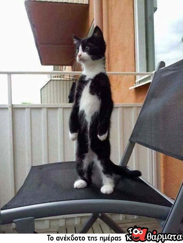 Γάτες που… κάνουν τα δικά τους! #99