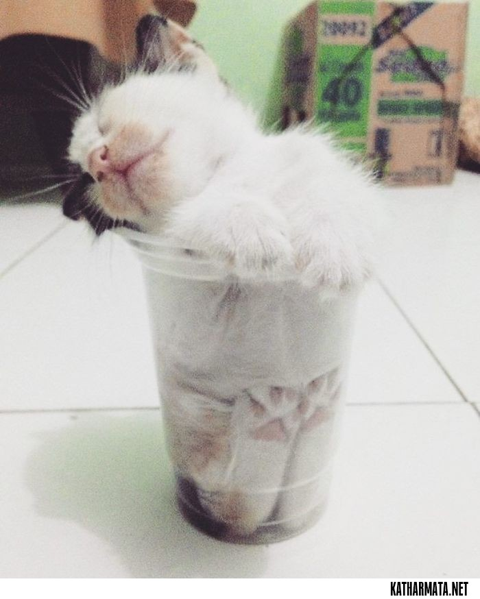 63572557fc7a 40 φωτογραφίες που αποδεικνύουν ότι οι γάτες χωράνε παντού – Σελίδα ...