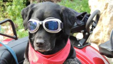 Ανέκδοτο: Η πορεία και ο σκύλος