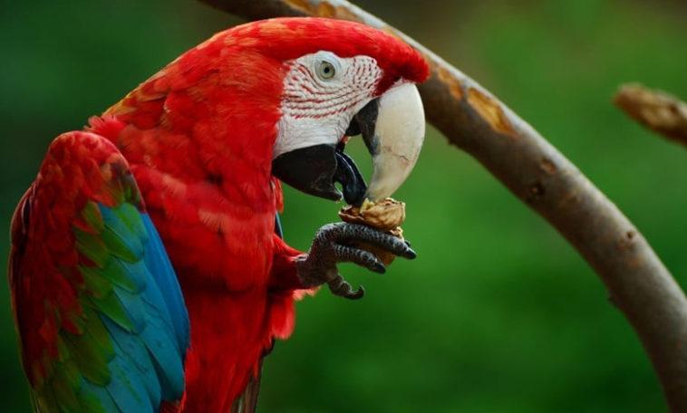 Ανέκδοτο: Ο κόκκινος παπαγάλος, ο τρελός και το... δέντρο!