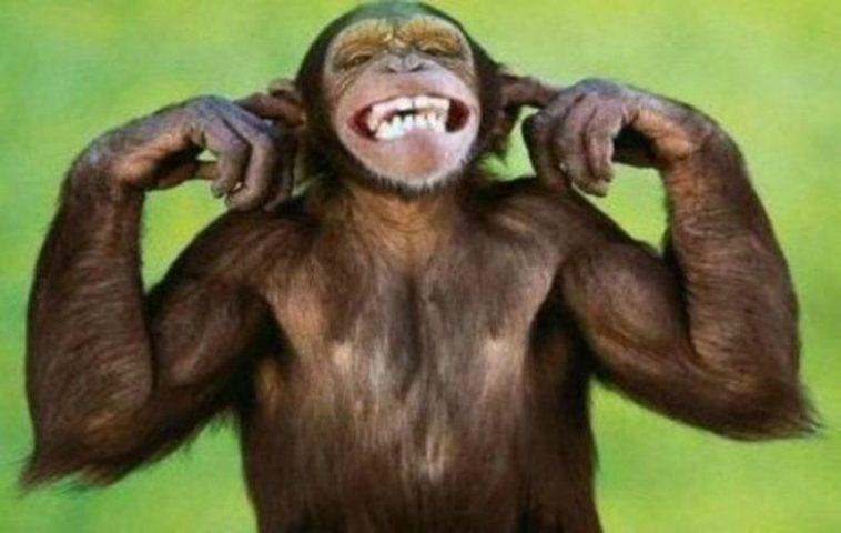 Το ανέκδοτο της ημέρας: Η μαϊμού και το κουκούτσι…