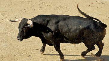 Το ανέκδοτο της ημέρας: Οι αγελάδες και ο καινούριος ταύρος