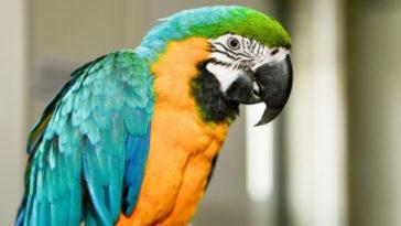 Το ανέκδοτο της ημέρας: Ο παπαγάλος και… γαλοπούλα