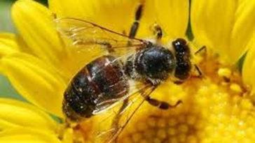Το ανέκδοτο της ημέρας: Το… μόριο κι η μέλισσα