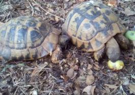 Το ανέκδοτο της ημέρας: Τράκαραν δυο χελώνες…