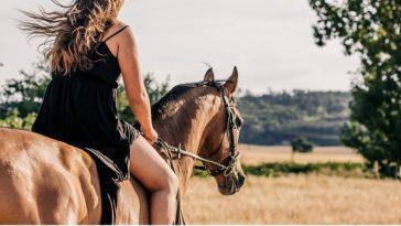 Ανέκδοτο: Το άλογο και ο μπάρμαν ! Τρελό γέλιο