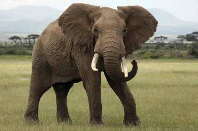 ελεφαντας ανεκδοτο