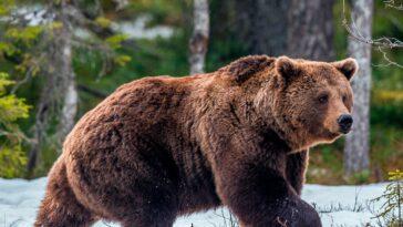 Ανέκδοτο: Δύο τύποι έχουν πάει για κατασκήνωση όταν μια αρκούδα εμφανίζεται μπροστά τους …! Τρελό γέλιο