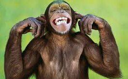 Ανέκδοτο: Παίρνει τηλέφωνο ένας το πρωί στην ρεσεψιόν του ξενοδοχείου και ρωτά …! Τρελό γέλιο