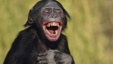 Ανέκδοτο: Ακουσε ο Τοτός τη λέξη ραντεβού και περίεργος αναρωτήθηκε τι σημαίνει …! Τρελό γέλιο