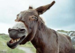 Σοφό Ανέκδοτο: Όταν ο Θεός έπλασε τον άνδρα …! Τρελό γέλιο