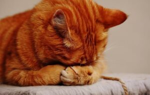 Ανέκδοτο: Ο πατέρας γάτος λέει στον γιο του: «Παιδί μου είναι καιρός…