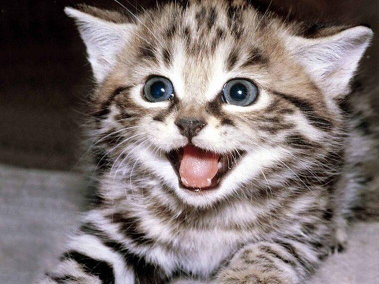Ανέκδοτο: Το τάϊσμα της γάτας