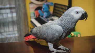 Ανέκδοτο: Ο παπαγάλος