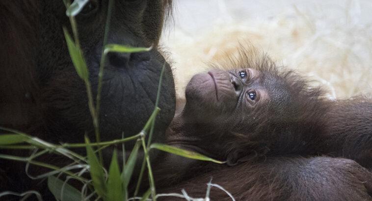 Ανέκδοτο: Στο ζωολογικό κήπο