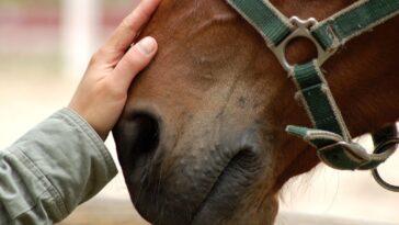 Ανέκδοτο: Το άλογο