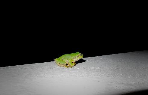 Ανέκδοτο: Το βατραχάκι