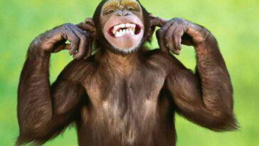 Ανέκδοτο: H μαϊμού