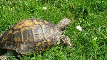 Ανέκδοτο: Η χελώνα