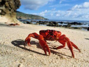 Ανέκδοτο: Στην παραλία … ένα καβουράκι